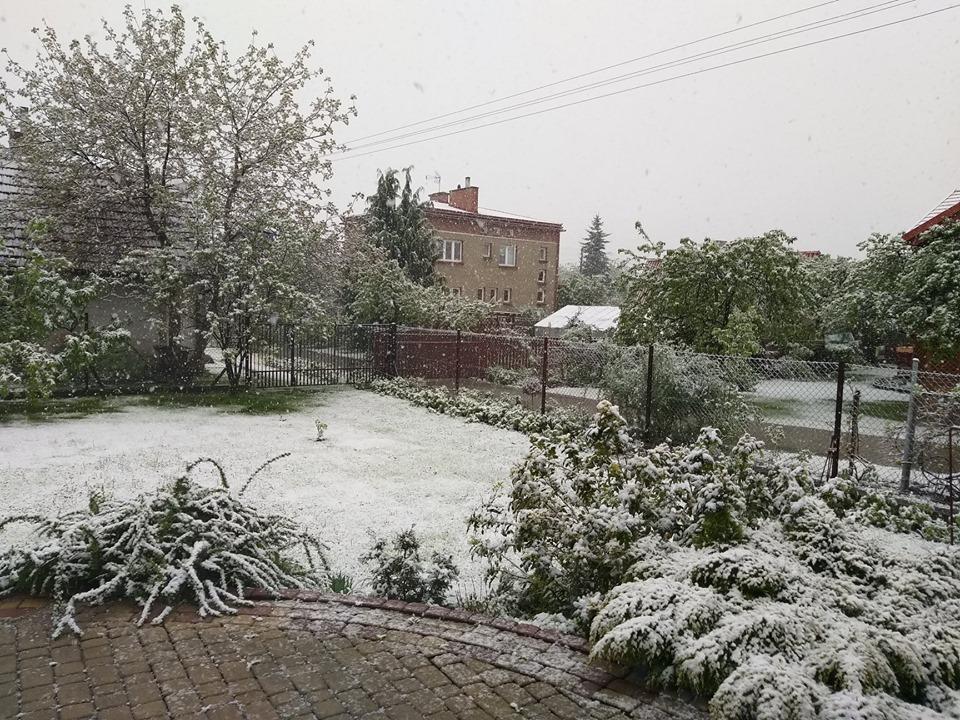 zima wiosna 2