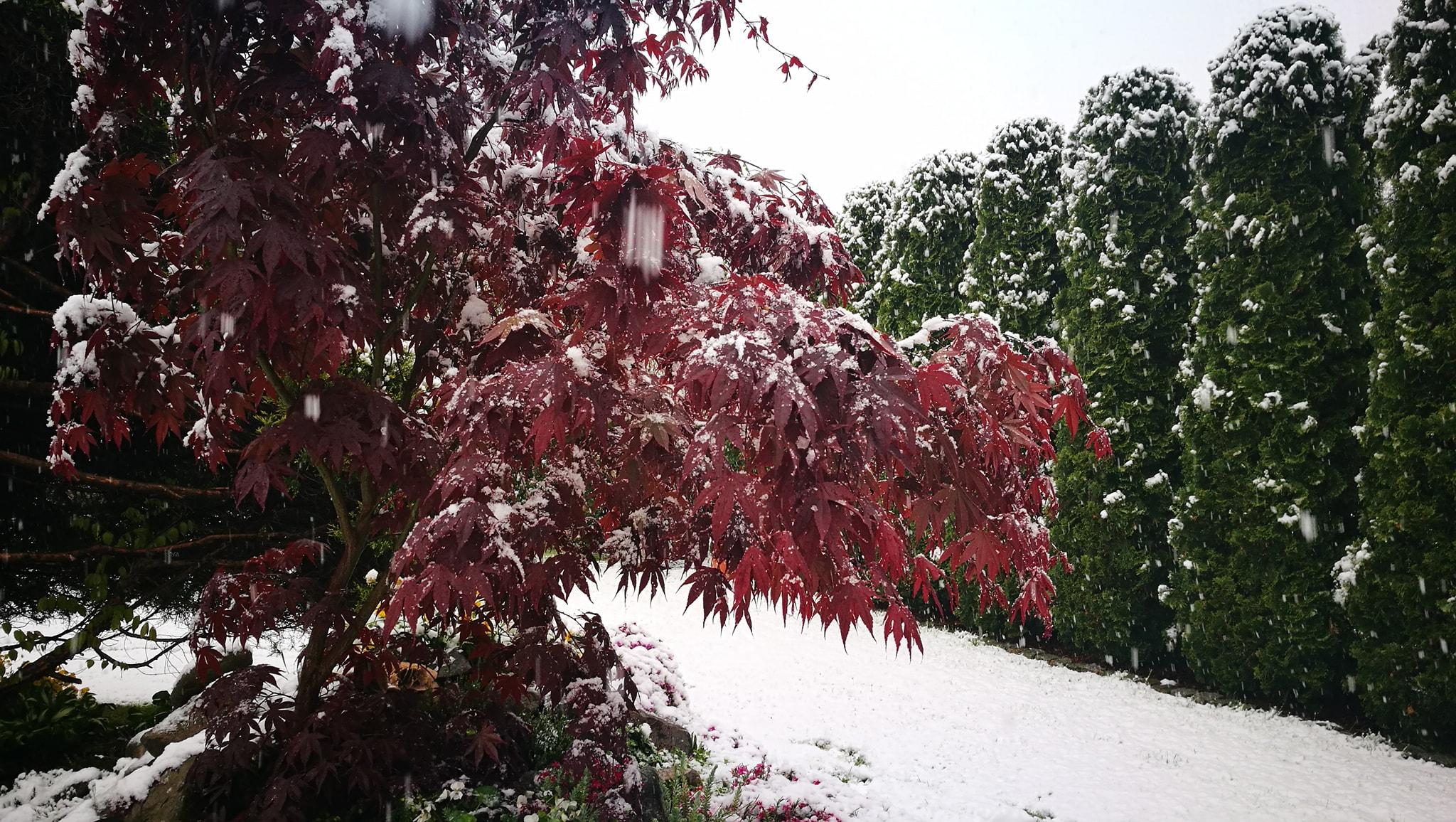 zima wiosna 3